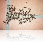 Борьба с муравьями зимой