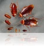 насекомые переносящие болезни