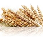 Как бороться с вредителями зерна и муки