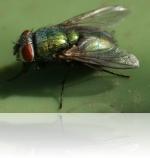 Как бороться с насекомыми-переносчиками инфекции