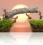 Мифы о насекомых