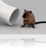 Мышь-полёвка